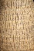 Coconut tree trunks — Stock Photo