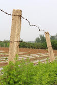 Cement column and barbed wire in the fields — Stock Photo