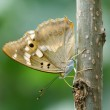 Butterfly — Stock Photo #25737607