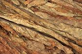 Tobacco leaf — Stock Photo