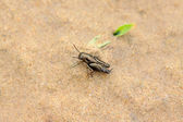 Orthoptera insects — Stock Photo