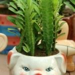 Flowerpots — Stock Photo #27683315
