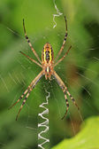 A spider — Stock Photo