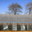 Vegetable greenhouse — Foto Stock