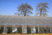 Vegetable greenhouse — Stockfoto