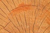 Woodiness tahıl — Stok fotoğraf
