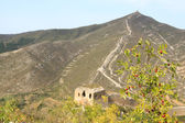 Original ecology of the great wall and wild jujube — Stock Photo