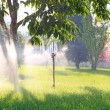Spray irrigation — Stock Photo #34102553