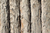 Orderly rows of pine bark — Stock Photo