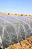 Vegetable greenhouse — Stock Photo
