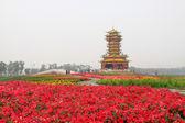 Six harmonies pagoda flowers — Zdjęcie stockowe