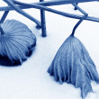 Stock Photo: Dry lotus leaf in snow