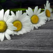 Closeup row of daisy on old wooden background — Stock Photo #26799771