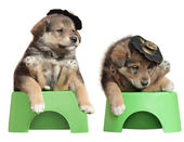 Puppies sitting on the Potty — Stock Photo