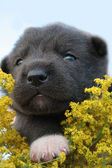 Gray puppy with yellow flowers — Stock Photo