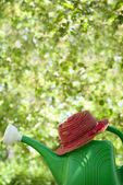 Garden watering can and a hat — Stock Photo