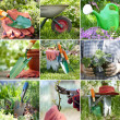 Composite image of gardening inspired photos — Stock Photo