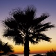 Beautiful palm against a tropical sunset — Stock Photo