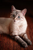 Cute young kitten looking at the camera — Stock Photo