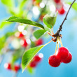 Stock Photo: Bunch of cherries