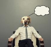 Business dog thinking — Stock Photo