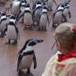 Stock Photo: Infant meets Humboldt Penguins