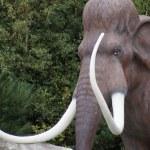������, ������: Woolly Mammoth Mammuthus primigenius