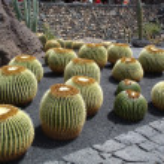 Ogród kaktusów — Zdjęcie stockowe