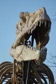 Tyrannosaurus Rex - T Rex — Stock Photo