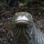 Statue of a Komodo Dragon - Varanus komodoensis — Stock Photo