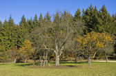 Hunting Seat On An Orchard Meadow — Stock Photo