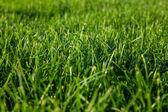 Green summer grass and sun — Stock Photo