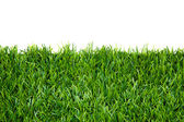 Frame background with green grass isolated — Stock Photo