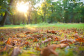 Beautiful morning in the autumn forest. — Stock Photo