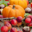 Pumpkins on colorful autumn — Stock Photo
