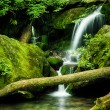 Grotto Falls, Great Smoky Mountain National Park — Stock Photo #25908013