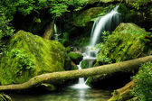 Grotto Falls, Great Smoky Mountain National Park — Stock Photo