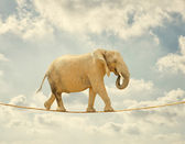 Elephant Walking On Rope — 图库照片