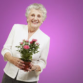 Senior woman holding a flower pot against a pink background — Stock Photo