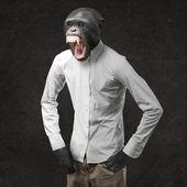 Macaco irritado gritando — Foto Stock