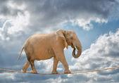Elefante caminando en la cuerda — Foto de Stock