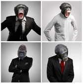 Series Of A Businessman With Monkey Head — Stockfoto