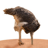 Ostrich Head Underground — Stock Photo