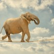 Elephant Walking On Rope — Stock Photo #22620521