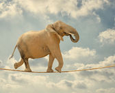 Elephant Walking On Rope — Stock Photo