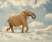 ロープの上を歩くゾウ — ストック写真