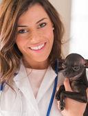 Female Doctor Holding Chihuahua Dog — Stock Photo