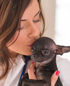 Female Doctor Kissing Chihuahua Dog — Stock Photo
