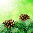 Pine cones and fir-tree — Stock Photo