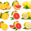 Fresh grapefruit,orange and lemon — Stock Photo